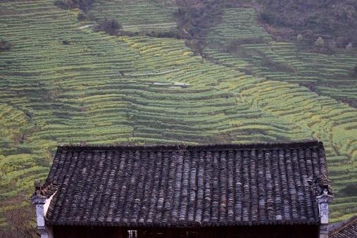Wuyuan